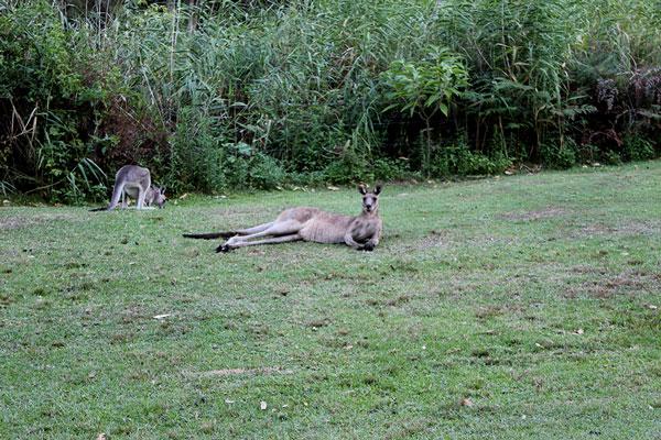 Cooranbong Wildlife